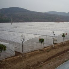UV Plastic 8mil 200micron 4m x 50m